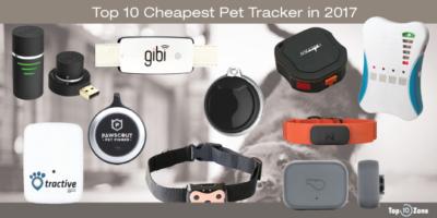 Best GPS Pet Tracker